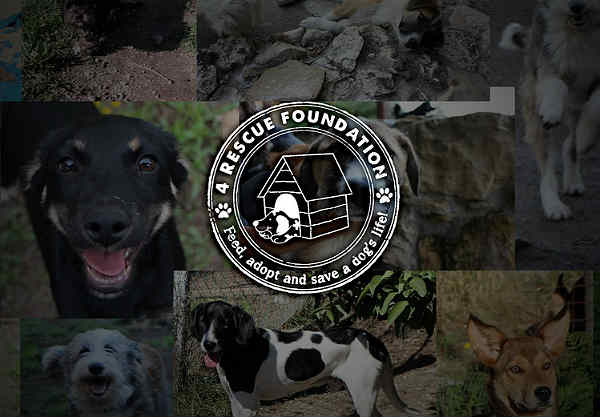 4 Rescue Foundation | Dierenartsen Dier en Dongen